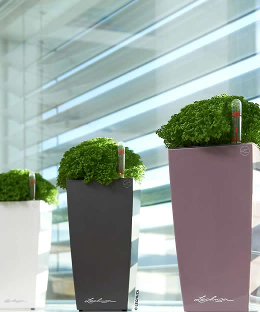 Mini-cubi-ythera-giftplanter.jpg