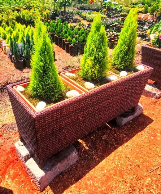 Trio Latin basket planter