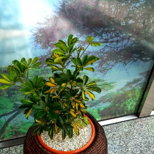 Big Round Synthetic Rattan planter
