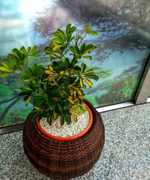 Round Synthetic Rattan planter