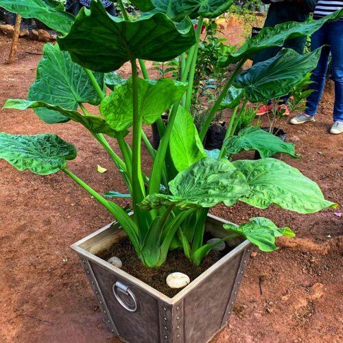 Terra flower pot