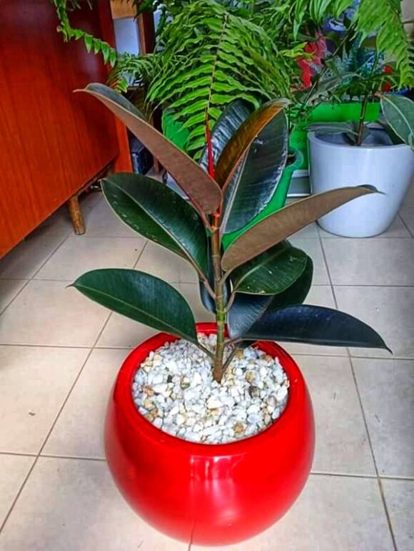Eclipse fiber planter
