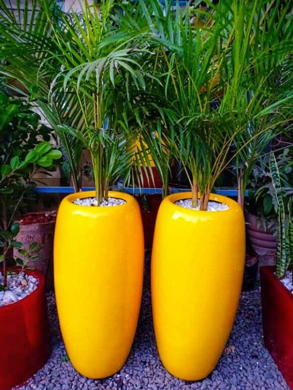 Canna fiber planter