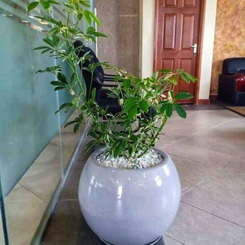 fiber planter