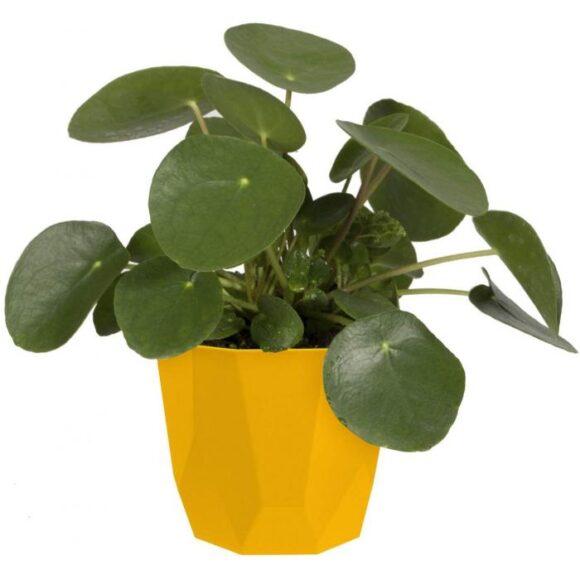 Geometric Indoor Flowerpot