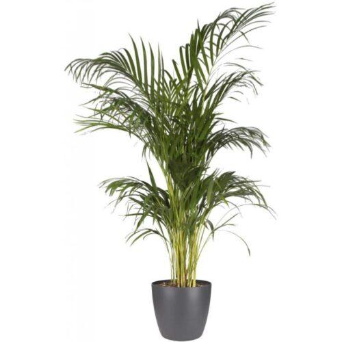 Round Indoor Flowerpot