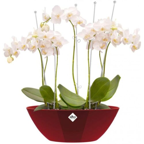 Oval Indoor Flowerpot