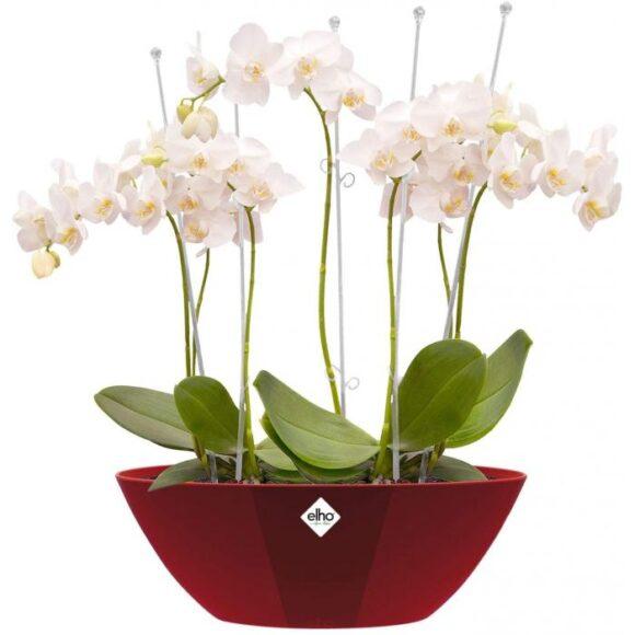 Oval Indoor Flowerpot
