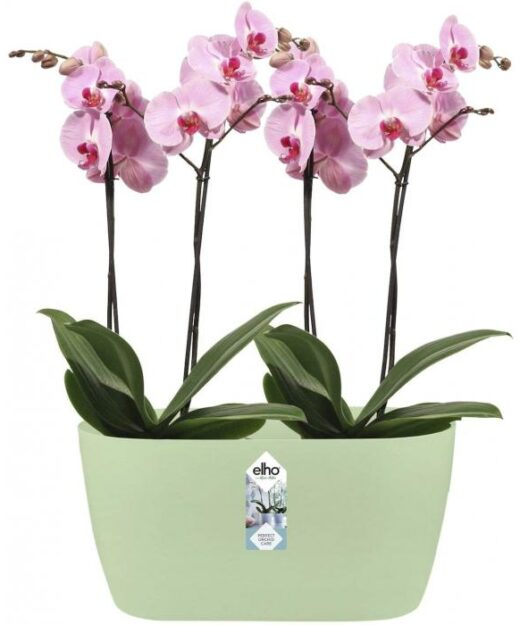 Orchids trough