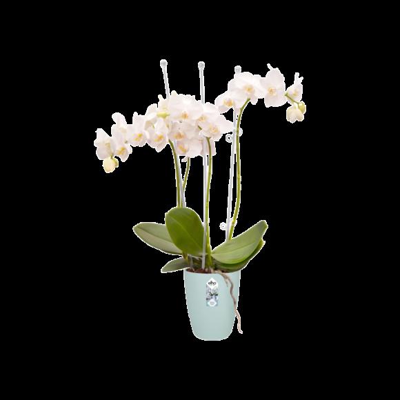 Orchid flower pot